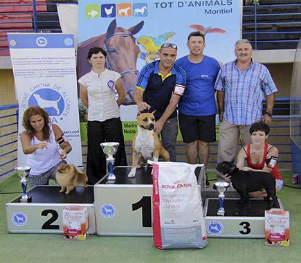 American staffordshire terrier Pernales Thalia amstaff criadorers Alicante