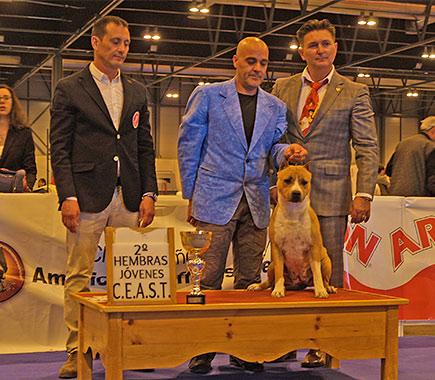 American staffordshire terrier Pernales Thalia amstaff perros criadores cachorros