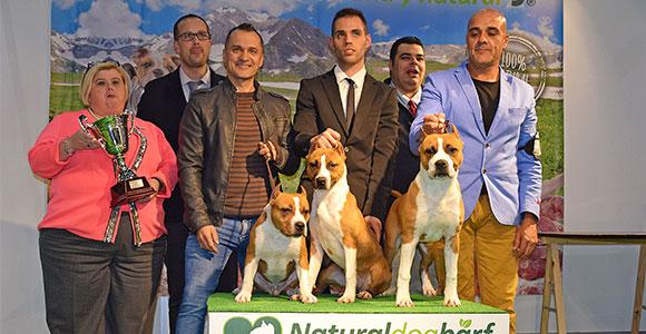 american-staffordshire-terrier-pernales-def-con-uno-amstaff-stanfford-criador-jpg-mejor-lote-de-cria