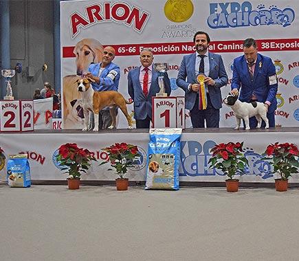 American-staffordshire-terrier-pernales-criador-perros-raza-amstaff-portos.stanfford
