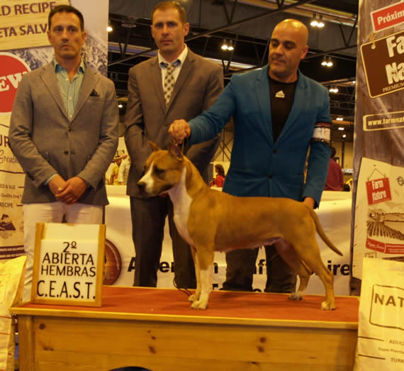 Multi Ch Pernales Red Bear AMSTAFF