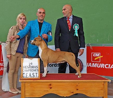 Pernales-Red-Bead-american-staffordshire-terrier-perros-criadero-amstaff-alicante