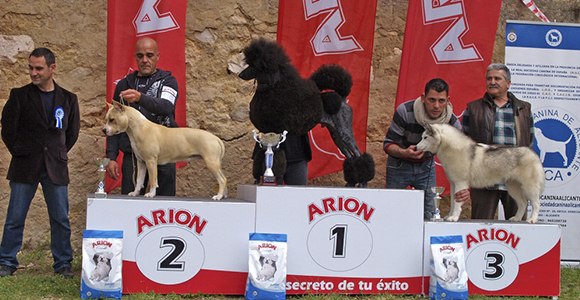 Pernales Sand Cloud american staffordshire terrier amstaff criadores alicante 2 Biss