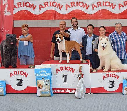 american-staffordshire-pernales-amstaff-raza-perros-cachorros-criadores-stanfford-alicante.biar.ciadero-comprar-vender