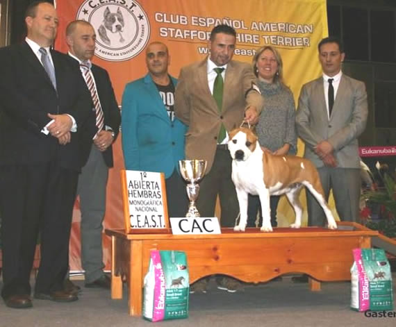 American Staffordshire Terrier | Campeona CEAST 2011 | Pernales Multi Ch Thunder Bully Budha Gold