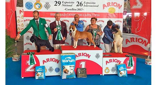 american-staffordshire-terrier-pernales-def-con-dos-amstaff-criadores-perros-raza.cachorros.bis-joven