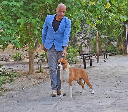 american-staffordshire-terrier-pernales-def-con-dos-amstaff-perros-criadores-stanfford-biar-alicante