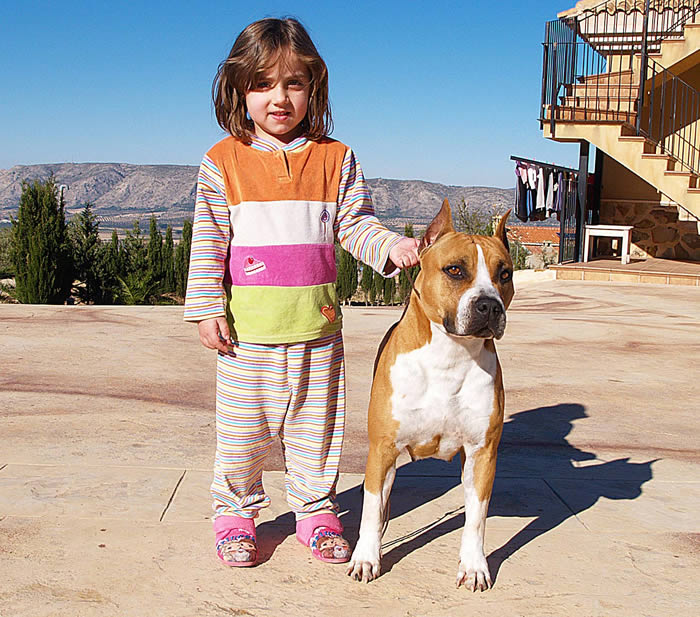 Criadores de American Staffordshire Terrier | Pernales