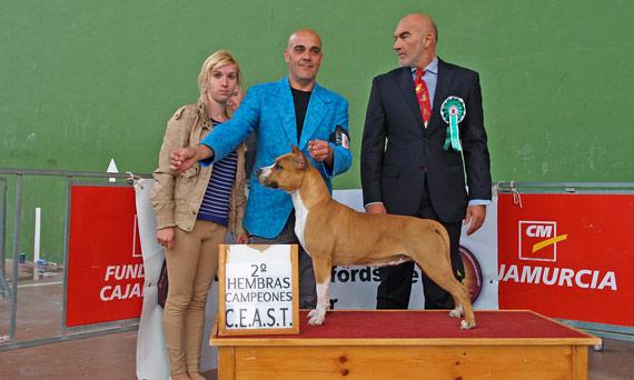 american-staffordshire-terrier-pernales-red-bead-criadero-perros-venta-alicante
