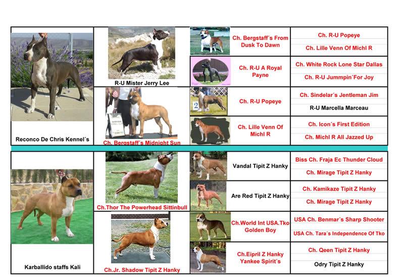 American Staffordshire Terrier | Pernales PERNALES COVA | Pedigree