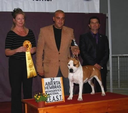 """American Staffordshire Terrier 